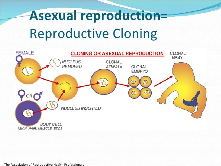 reproduction process in humans