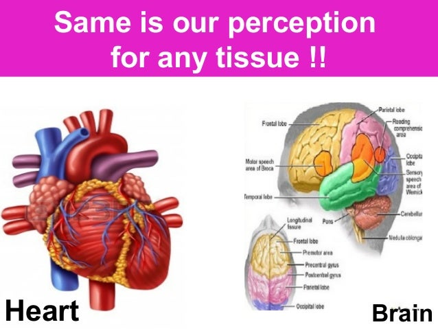 Heart Brain Same is our perception for any tissue !!