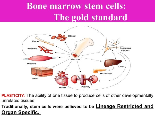 AUTOLOGUS – STEM CELLS • While most blood stem cells reside in the bone marrow, a small number are present in the bloodstr...