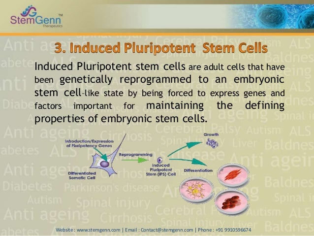 Stem Cell Treatment In India Stemgenn Therapeutics