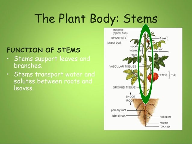 Stems Slides