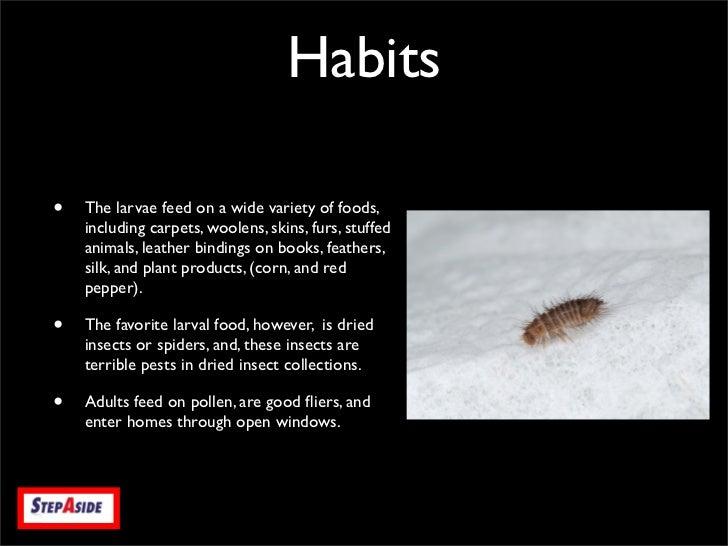 Varied Carpet Beetle Step Aside Pest Management