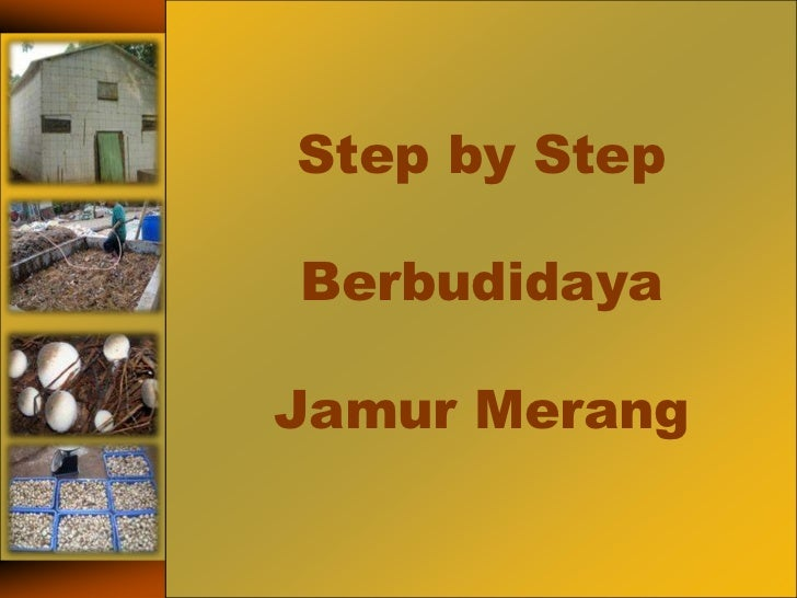 Step by StepBerbudidayaJamurMerang<br />