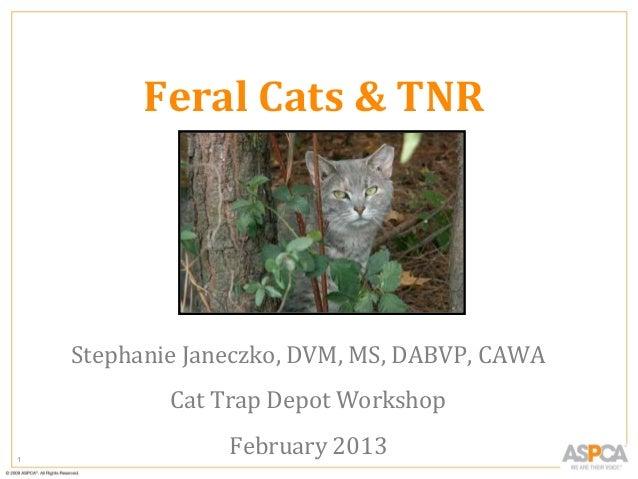 Feral Cats & TNR  Stephanie Janeczko, DVM, MS, DABVP, CAWA Cat Trap Depot Workshop 1  February 2013