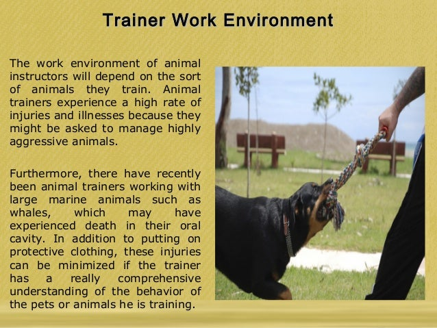 Stephanie Taunton - Tips To Become An Animal Trainer
