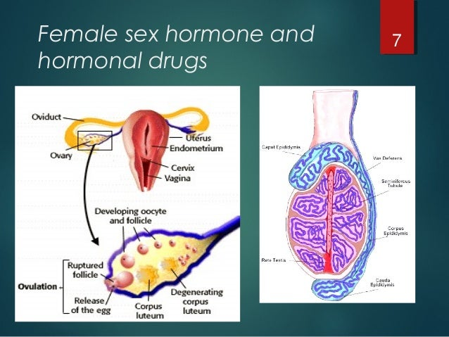 stimulates sex hormone production triggers ovulation and stimulates in Athens