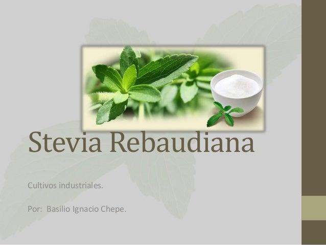 Stevia Rebaudiana Cultivos industriales. Por: Basilio Ignacio Chepe.