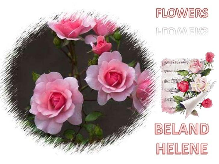 FLOWERS<br />BELAND HELENE<br />