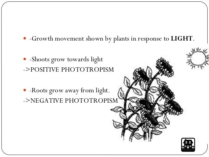 Stimuli and responses in plants