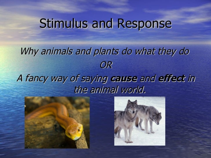 Stimulus and Response <ul><li>Why animals and plants do what they do  </li></ul><ul><li>OR </li></ul><ul><li>A fancy way o...