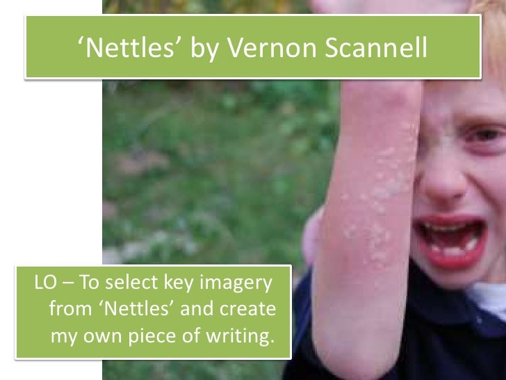 GCSE Poem Analysis: Nettles by Vernon Scannell