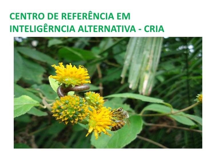 CENTRO DE REFERÊNCIA EMINTELIGÊRNCIA ALTERNATIVA - CRIA