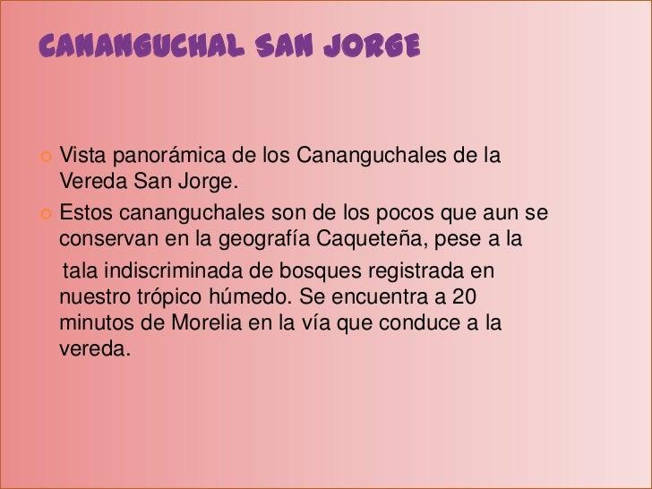 CANANGUCHAL SAN JORGE<br />Vista panorámica de los Cananguchales de la Vereda San Jorge.<br />Estos cananguchales son de l...