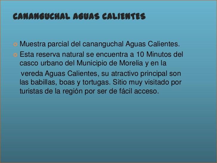 CANANGUCHAL AGUAS CALIENTES<br />Muestra parcial del cananguchal Aguas Calientes.<br />Esta reserva natural se encuentra a...