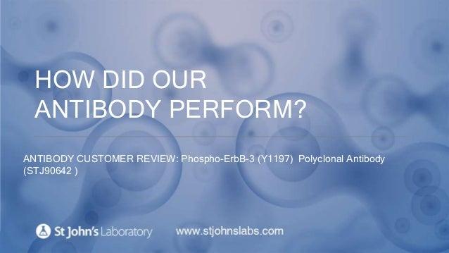 HOW DID OUR ANTIBODY PERFORM? ANTIBODY CUSTOMER REVIEW: Phospho-ErbB-3 (Y1197) Polyclonal Antibody (STJ90642 )