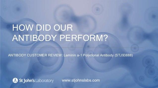 HOW DID OUR ANTIBODY PERFORM? ANTIBODY CUSTOMER REVIEW: Laminin a-1 Polyclonal Antibody (STJ93888)