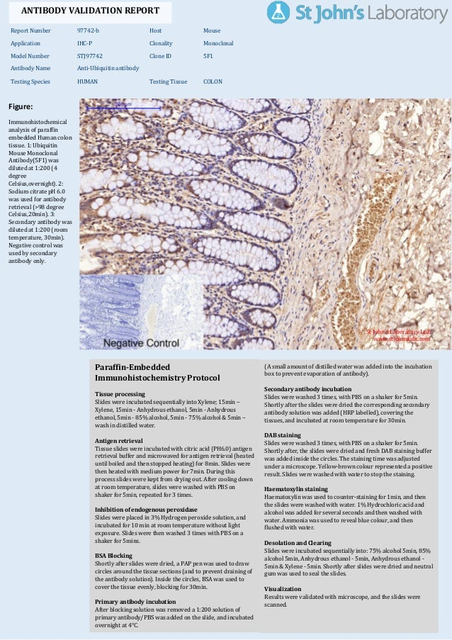 Immunohistochemistry Antibody Validation Report For Anti