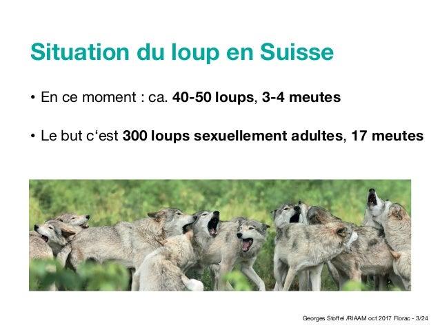 Les grands prédateurs et les alpages pastoraux en Suisse - STOFFEL Slide 3