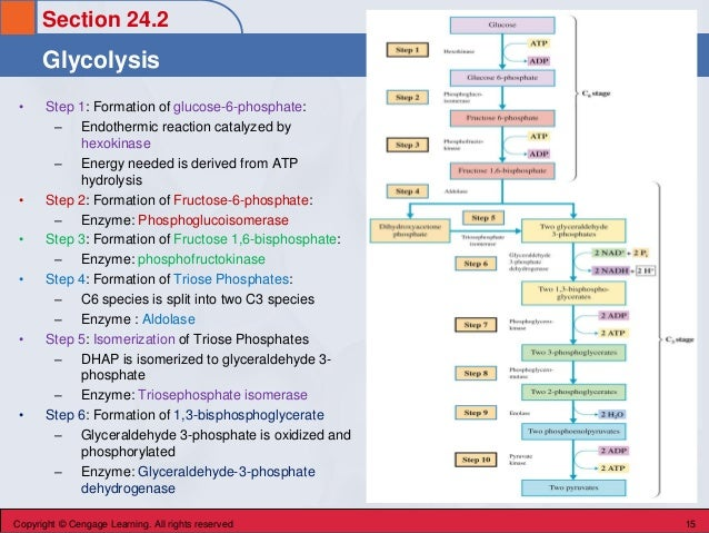 Section 24.2 Glycolysis Copyright © Cengage Learning. All rights reserved 15 • Step 1: Formation of glucose-6-phosphate: –...