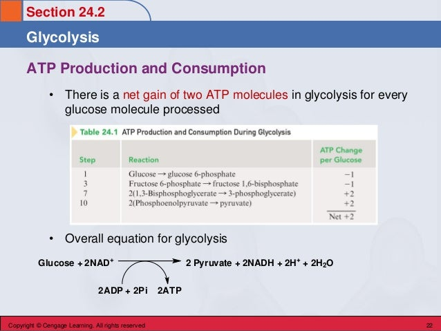 Section 24.2 Glycolysis Copyright © Cengage Learning. All rights reserved 22 ATP Production and Consumption • There is a n...