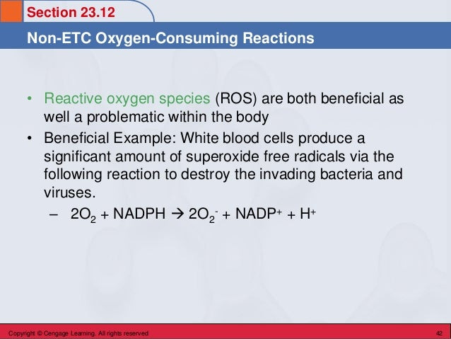 Section 23.12 Non-ETC Oxygen-Consuming Reactions Copyright © Cengage Learning. All rights reserved 42 • Reactive oxygen sp...