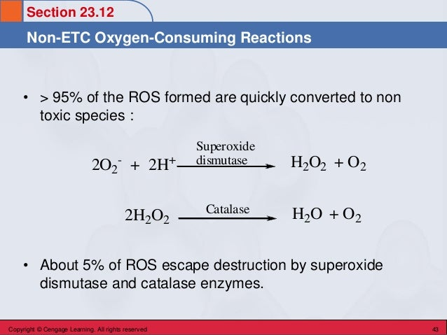 Section 23.12 Non-ETC Oxygen-Consuming Reactions Copyright © Cengage Learning. All rights reserved 43 • > 95% of the ROS f...