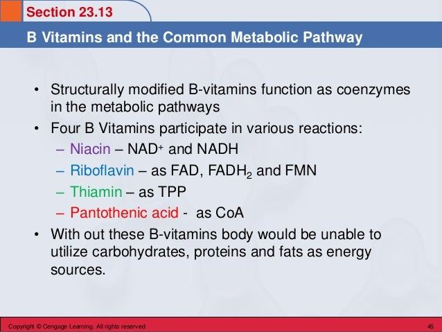 Section 23.13 B Vitamins and the Common Metabolic Pathway Copyright © Cengage Learning. All rights reserved 45 • Structura...