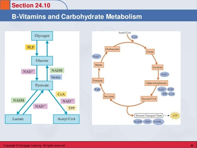 Section 24.10 B-Vitamins and Carbohydrate Metabolism Copyright © Cengage Learning. All rights reserved 46