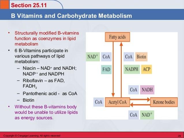 chem 45 biochemistry stoker chapter 25 lipid metabolism