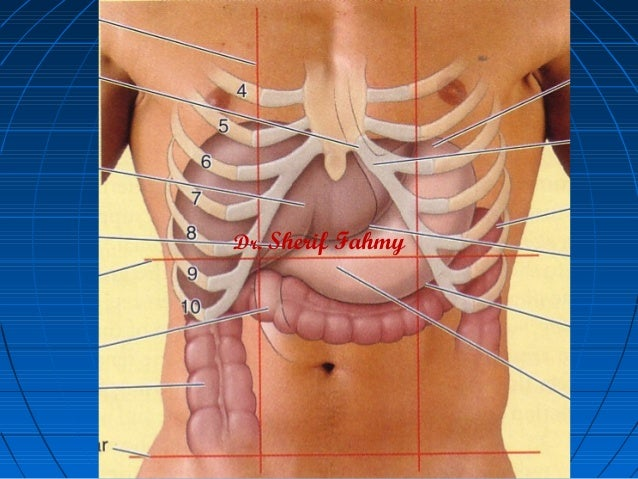 The Stomach (Anatomy of the Abdomen)