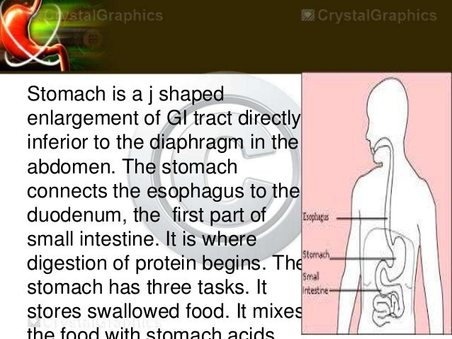 Stomach by kp [autosaved] Slide 3