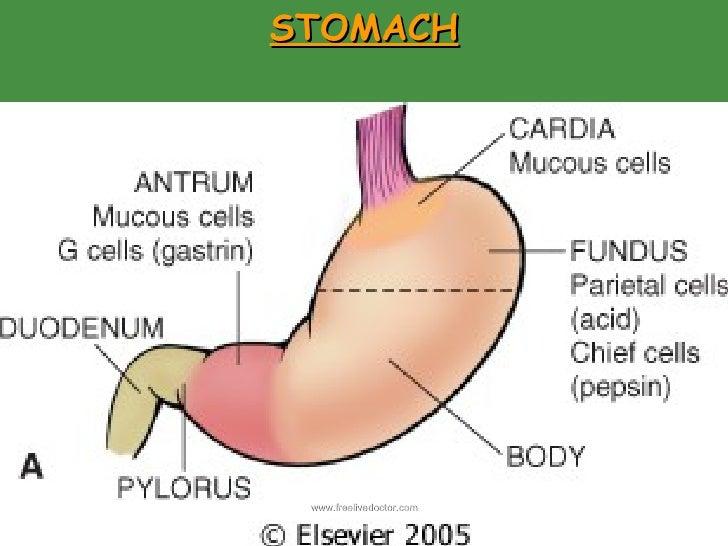 Stomach Pathology