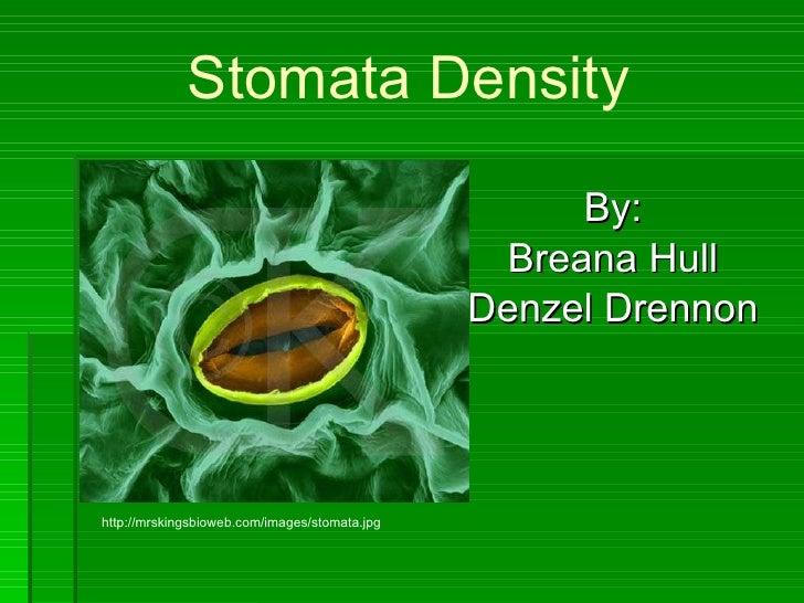 Stomata Density By: Breana Hull Denzel Drennon http://mrskingsbioweb.com/images/stomata.jpg