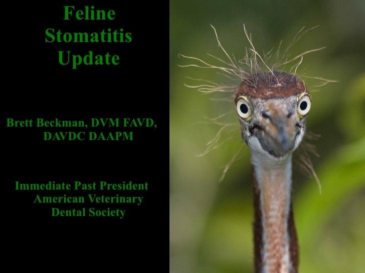 <ul><li>Feline Stomatitis Update </li></ul><ul><li>Brett Beckman, DVM FAVD, DAVDC DAAPM </li></ul><ul><li>Immediate Past P...
