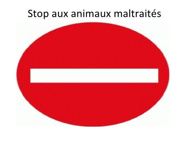 Stop aux animaux maltraités