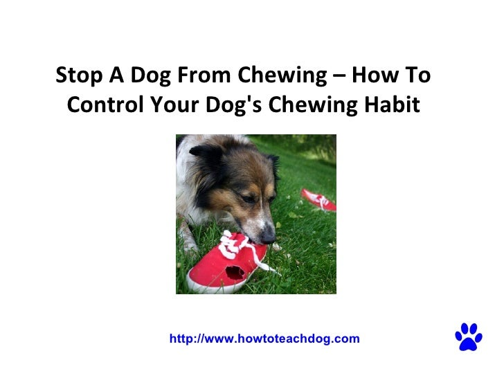 Stop A Dog From Chewing – How To Control Your Dog's Chewing Habit  http://www.howtoteachdog.com