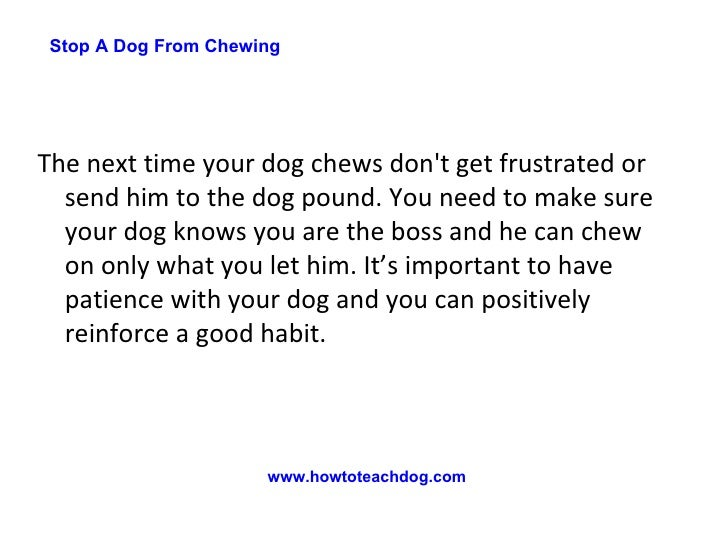how to stop a dog from chewing things