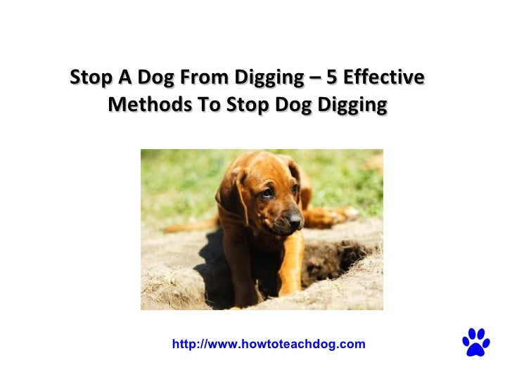 Stop A Dog From Digging – 5 Effective Methods To Stop Dog Digging  http://www.howtoteachdog.com