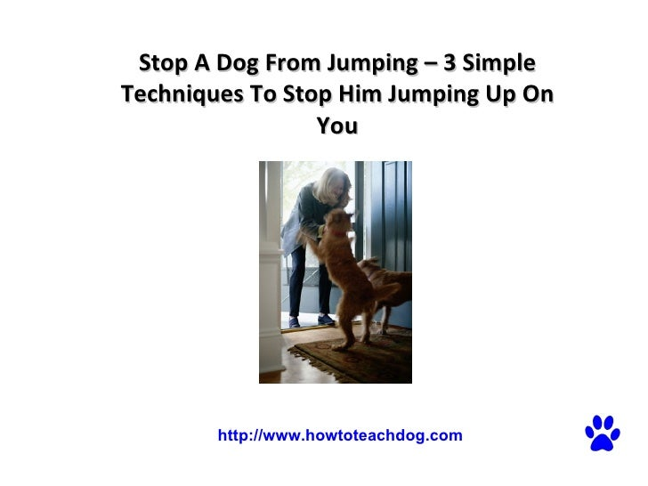 Stop A Dog From Jumping – 3 Simple Techniques To Stop Him Jumping Up On You  http://www.howtoteachdog.com