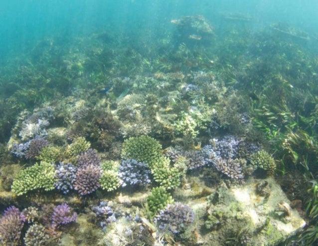 Pilot Project 1: New reef to stop erosion of turtle nesting beaches. Bali Turtle Island (Pulau Serangan), Bali.  Photograp...