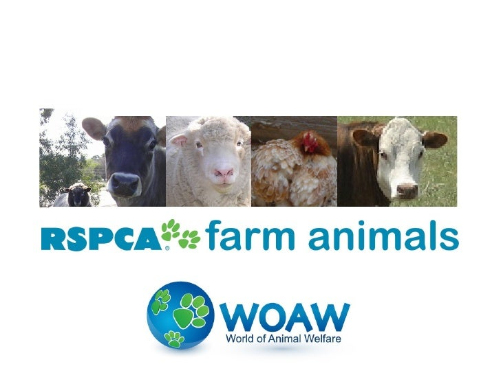 There are many different farm       animals at the RSPCA.