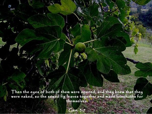 Story of garden of eden