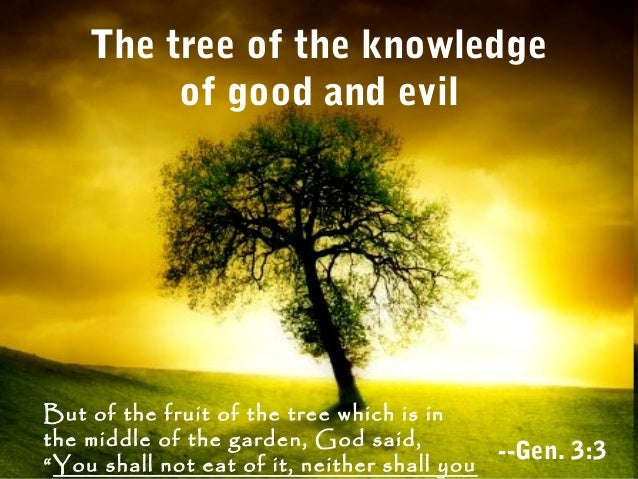 Image result for the tree of knowledge of good and evil