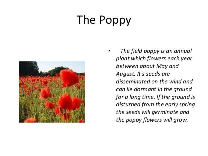 Story of the memorial day poppy mightylinksfo Choice Image