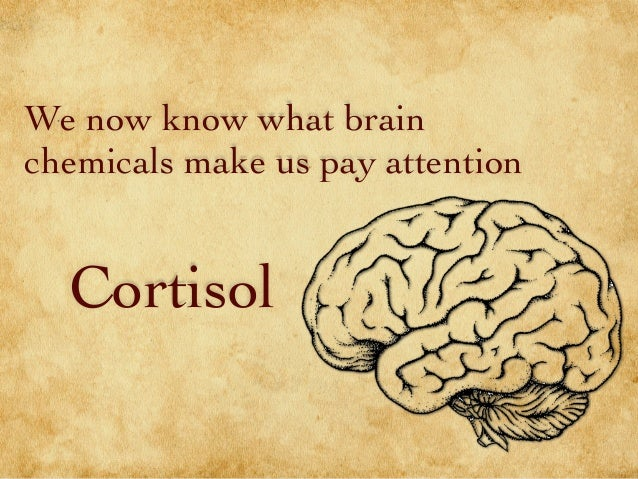 We now know what brain chemicals make us pay attention Cortisol