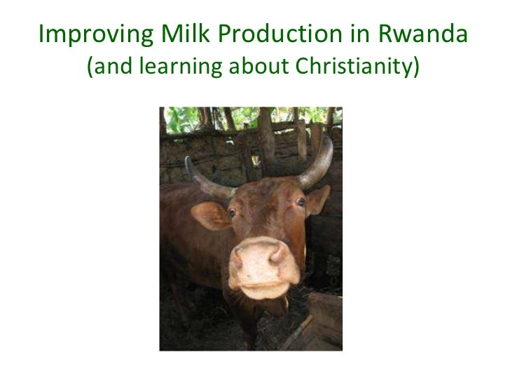 Improving Milk Production in Rwanda   (and learning about Christianity)