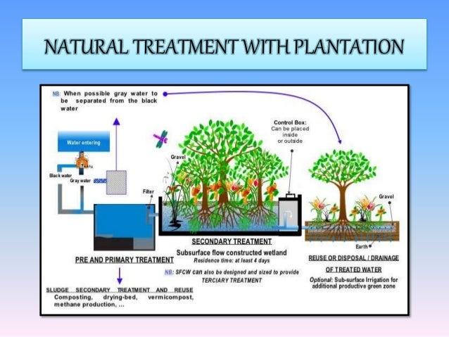 Stp Presentation plantation