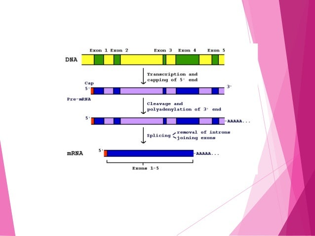  Isolate required enzyme gene, e.g. via mRNA and its conversion into cDNA  Sequence the DNA of the gene (in order to dec...