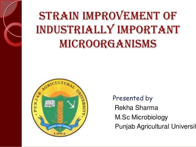 Strain improvement ofindustrially importantmicroorganismsPresented byRekha SharmaM.Sc MicrobiologyPunjab Agricultural Univ...