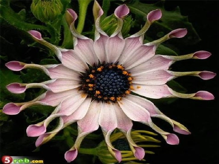 Strange Beautiful Flowers Slide 3